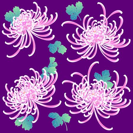 Japanese style Chrysanthemum flower
