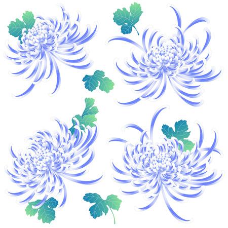 japanese style: Japanese style Chrysanthemum flower Illustration