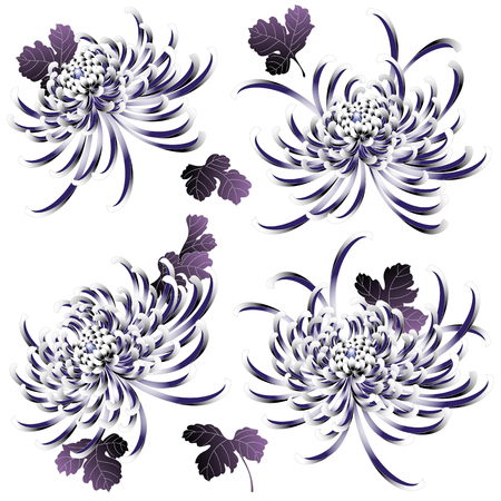 Japanese style Chrysanthemum flower Illustration