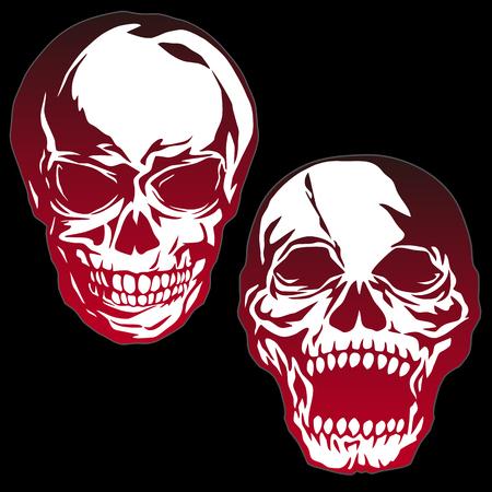 Skull illustration,