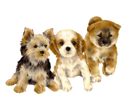 かわいい犬のイラスト、 写真素材