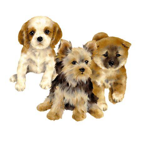 Illustration of dog Stock Photo