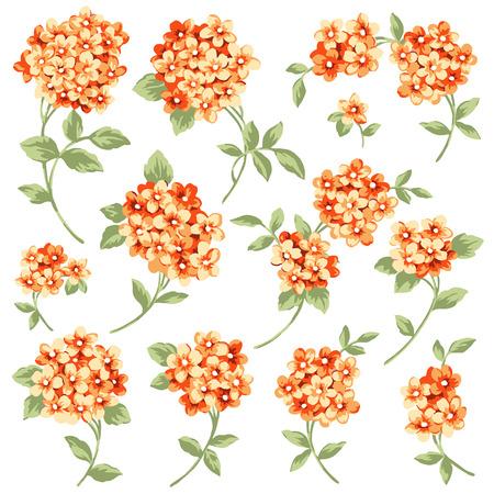 corsage: Flower illustration material Illustration