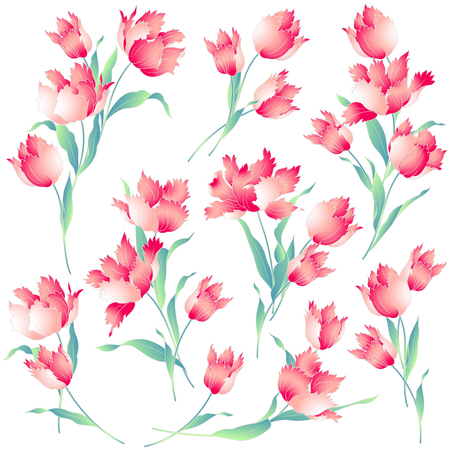 Japanese style tulip Illustration