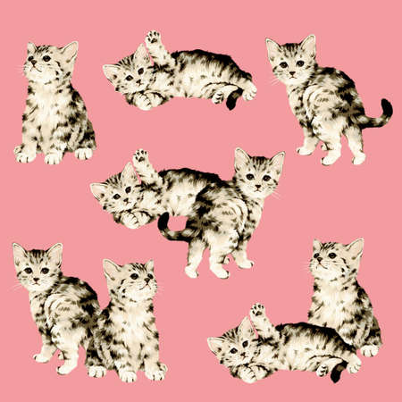 cheeky: Pretty cat illustration