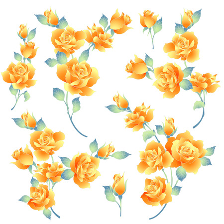 Rose flower illustration, I made a beautiful rose a painting I worked in vectors