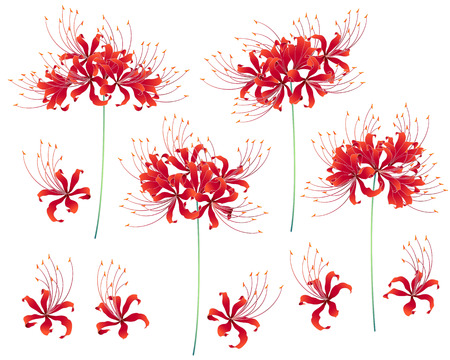Design of a Japanese style cluster amaryllis.