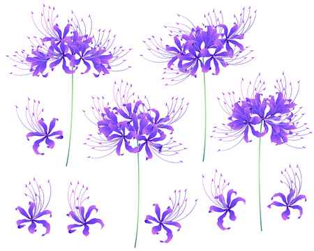 Japanese style cluster amaryllis, Design of a Japanese style cluster amaryllis, It is used for a kimono,