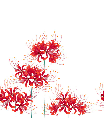 Japanese style cluster amaryllis pattern, Design of a Japanese style cluster amaryllis, It is used for a kimono