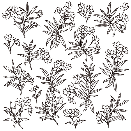 Flower illustration material, I designed a flower, Illustration