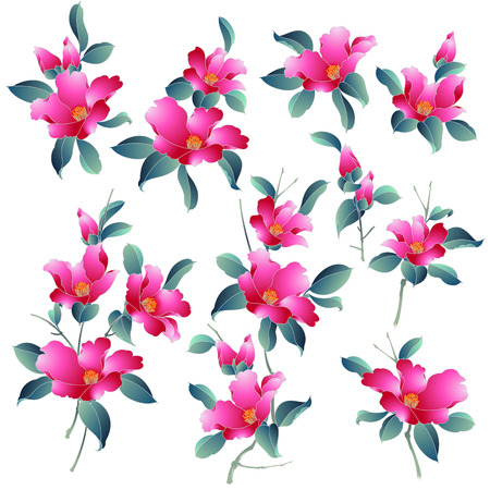 Japanese style camellia illustration, Design of the Japanese style camellia, Illustration