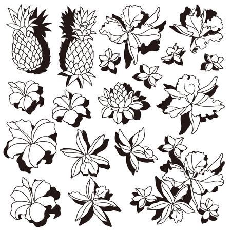Tropical flower illustration drew a tropical flower for designing it