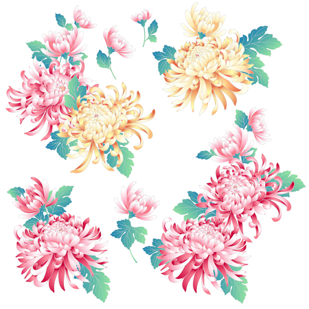Japanese style chrysanthemum, Design of Japanese style Chrysanthemum flower,