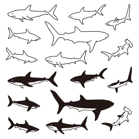 Illustration of the shark, I drew a shark simply,