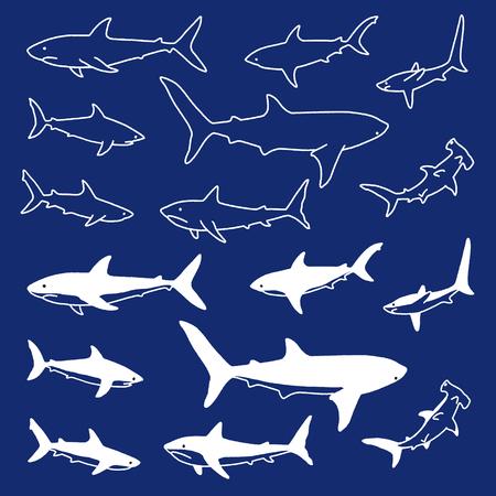 Illustration of the shark,