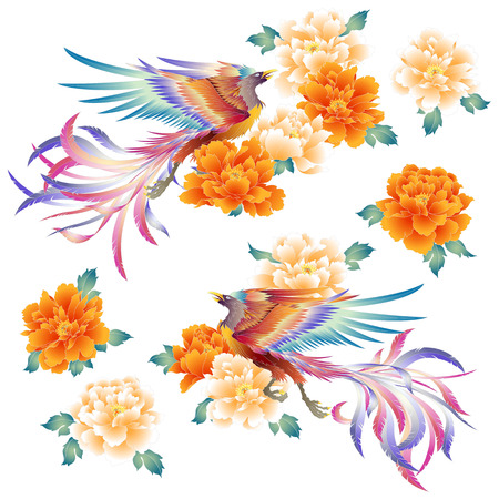 Illustration of a Chinese phoenix and the peony