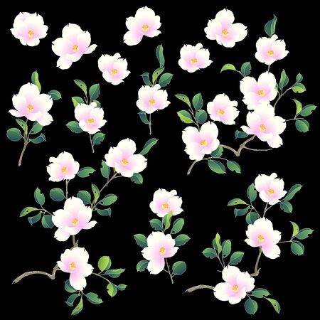 Illustration of the camellia which is beautiful with Japanese style,