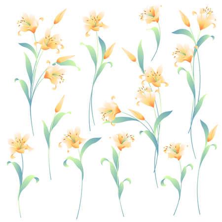 Beautiful Japanese lily seamless illustration pattern,