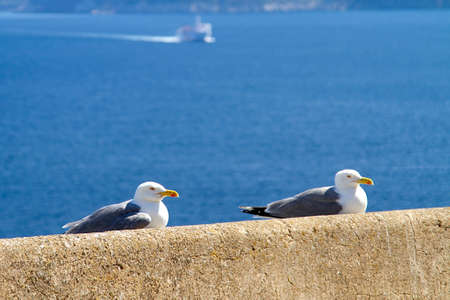 seagulls resting in the sun