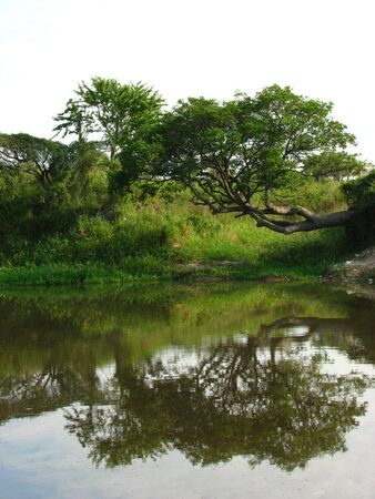 paraguay: Interesting tree shape at Confuso River Bank, Paraguay