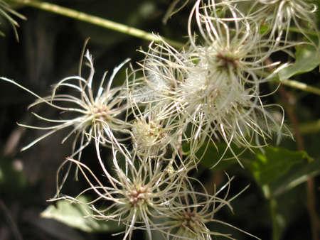 fuzzy flower too
