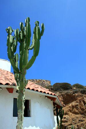 A cactus stands tall near a desert home. photo
