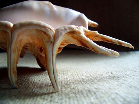 oceanic: A conch shell flipped upside down, on its tiptoes.