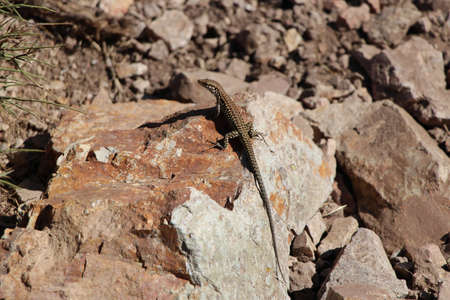 coldblooded: Lizard on the rock