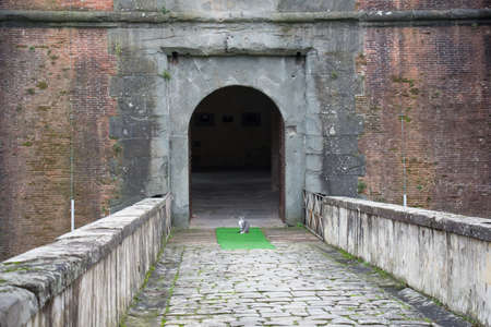 strengthening: Italy, Pistoia - November 27 2016: the view of a cat at the main gate of the Medici Fortress of Santa Barbara on November 27 2016 in Pistoia Italy.