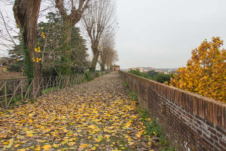 strengthening: The view of autumn landscape with fallen yellow leaves on a path in the Medici Fortress of Santa Barbara. Pistoia. Tuscany. Italy. Stock Photo