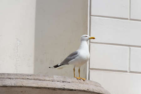 Close up view of a gull in a sunny day. 写真素材