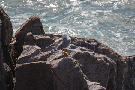 The view of seagull cleaning its feathers on a rock with sea on background.