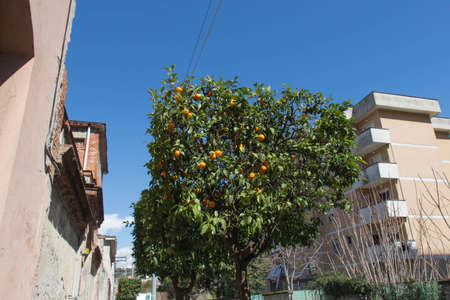 The view of an orange tree on a street in springtime.