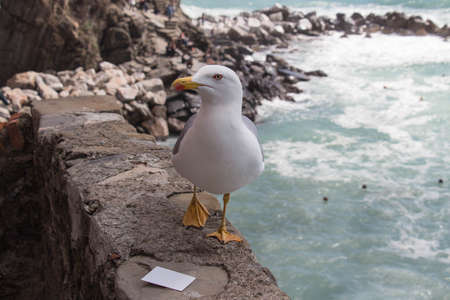 Close up view of a seagull with seascape on background.
