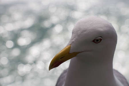 Close up view of seagull head.