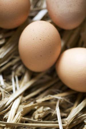 Vier bruine eieren op bed van stro Stockfoto
