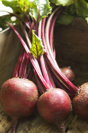 Freshly picked beetroot in wooden box Foto de archivo