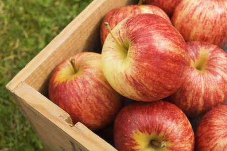 Doos van geoogste appels op gras Stockfoto