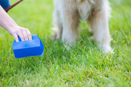 antisocial: Owner Clearing Dog Mess With Pooper Scooper