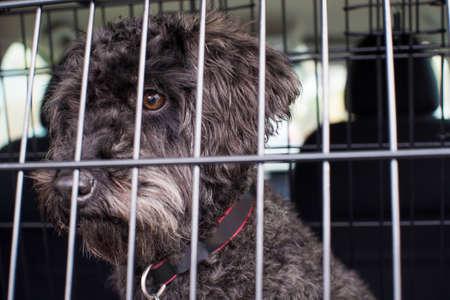 旅の準備ができて車のクレートに座っているペットの犬 写真素材