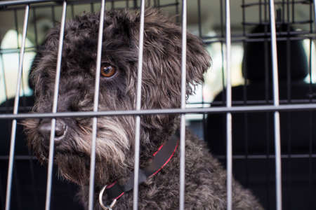 Pet Dog Sitting In Car Crate Ready For Journey