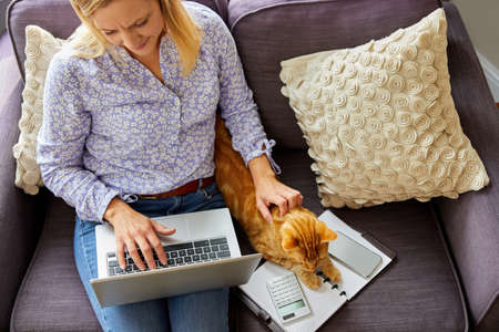 Overhead Shot Of Woman Working From Home On Laptop Sitting On Sofa During Lockdown Stroking Pet Cat