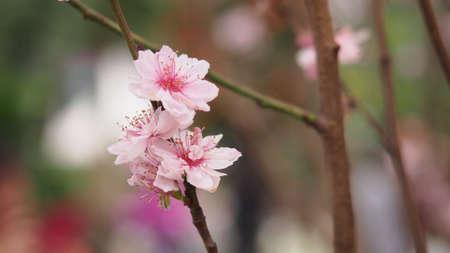 close up: Pink flower close up