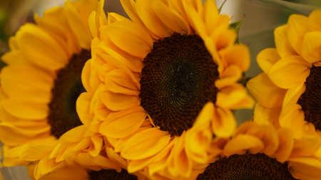 close up: sunflower close up