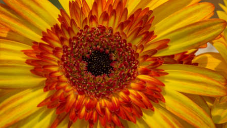 vibrate: close up of sunflower