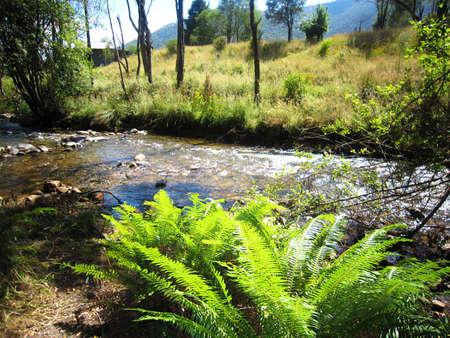Scenic view of a river in Harrietville Australia