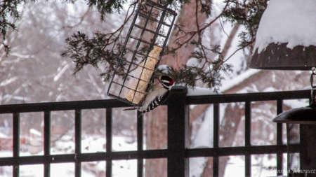 Oiseau alimentation en hiver Banque d'images - 97318660