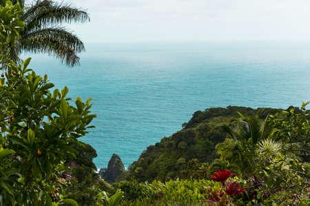 eden: Eden garden-Hawai,Maui-road to Hana Stock Photo