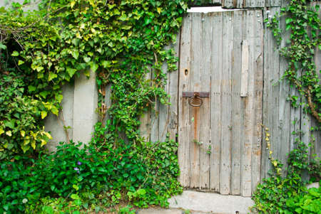 Old wooden door with an iron pen and ivy photo