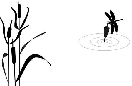 canne: Libellula seduto sul galleggiante su uno sfondo di canne